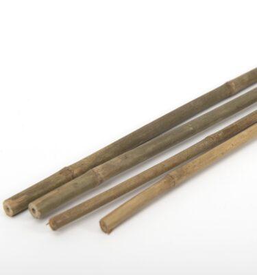 canne-di-bamboo-regina-naturae